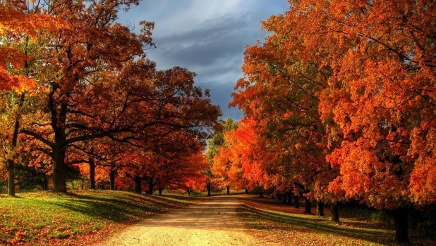 Autumn Leaves and Colorful Drives